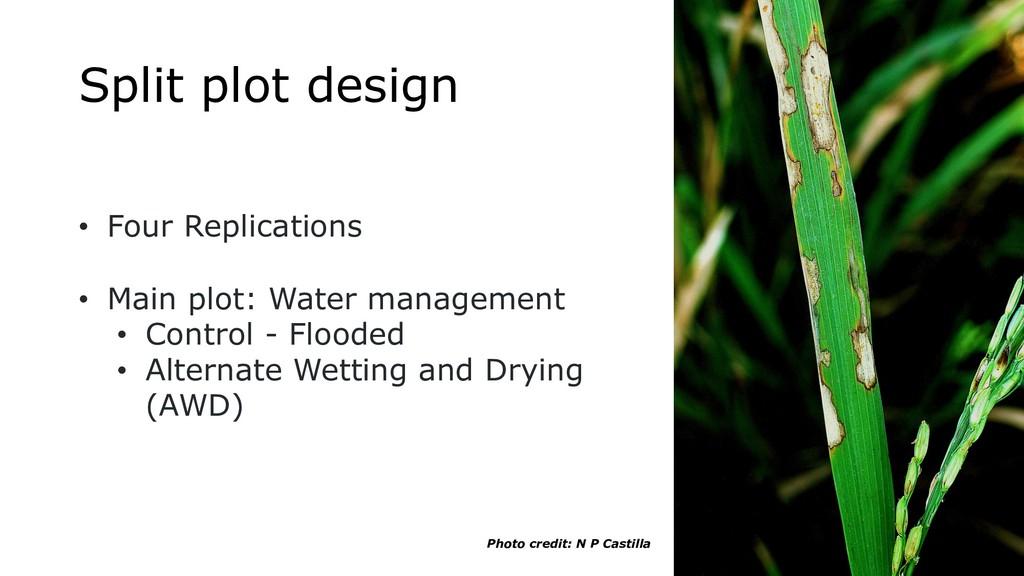 Split plot design • Four Replications • Main pl...