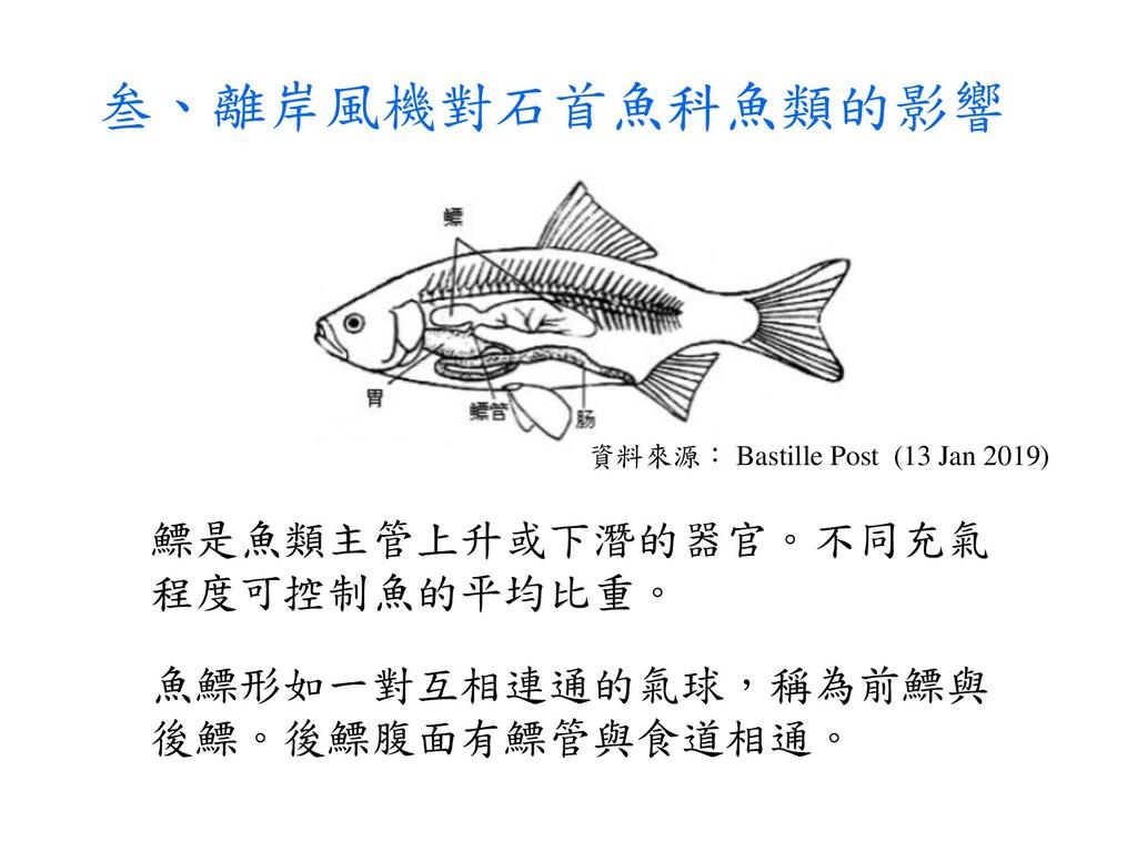 叁、離岸風機對石首魚科魚類的影響 鰾是魚類主管上升或下潛的器官。不同充氣 程度可控制魚的平均比...