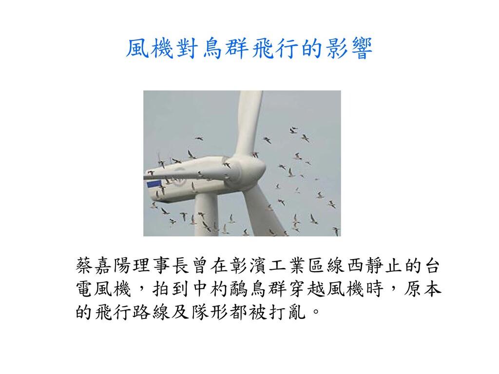 風機對鳥群飛行的影響 蔡嘉陽理事長曾在彰濱工業區線西靜止的台 電風機,拍到中杓鷸鳥群穿越風機時...