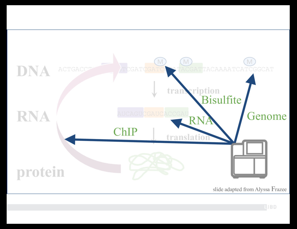 AUCAGUCGAUCACCGAU transcription RNA translation...