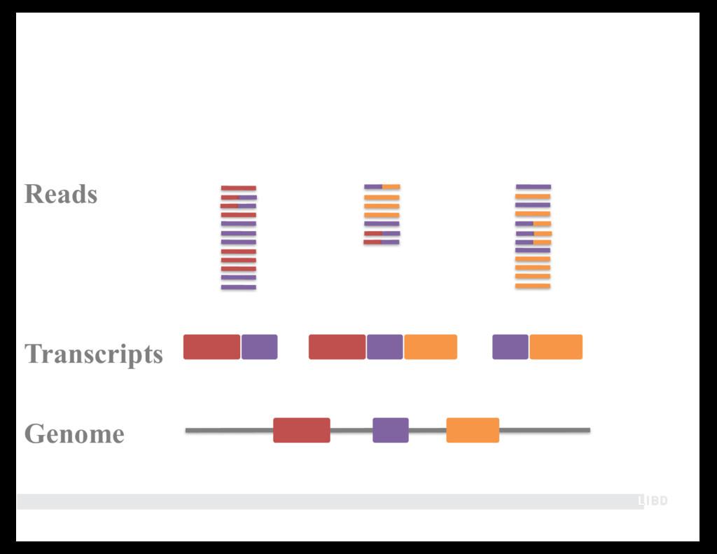 Genome Transcripts Reads