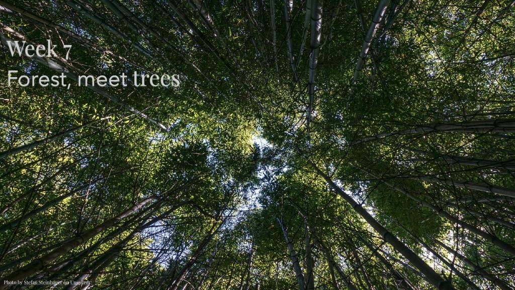 Week 7 Forest, meet trees Photo by Stefan Stei...