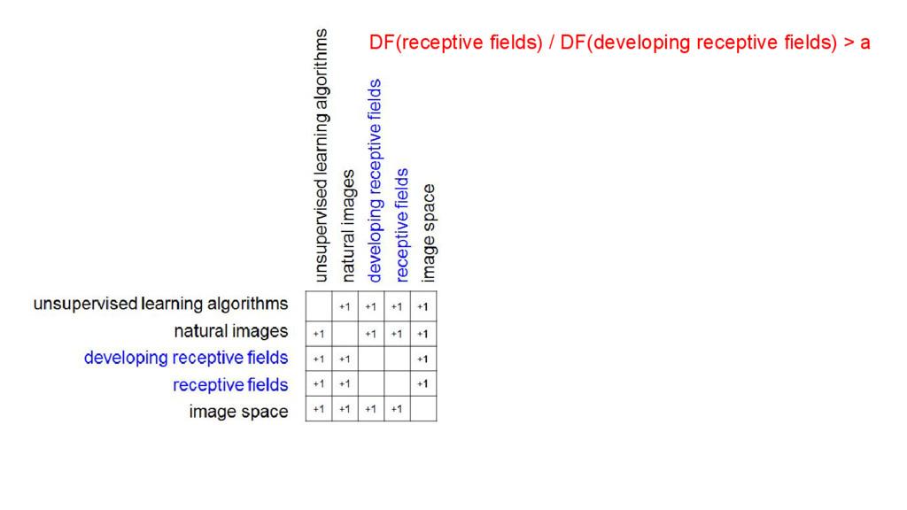 DF(receptive fields) / DF(developing receptive ...