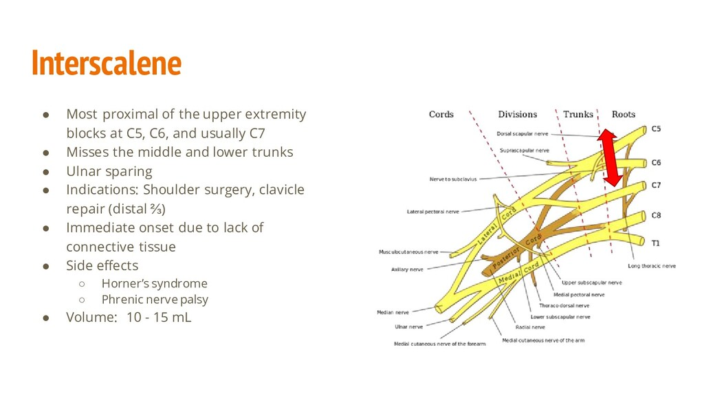 Interscalene ● Most proximal of the upper extre...