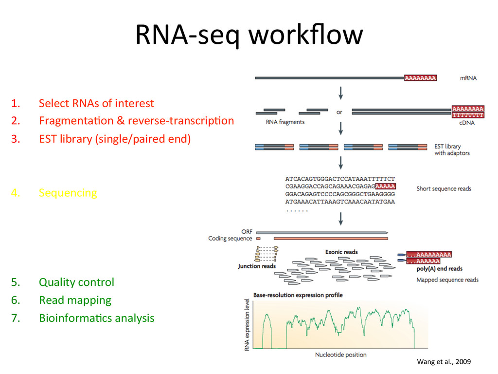 RNA-‐seq workflow  1. Select RNAs ...