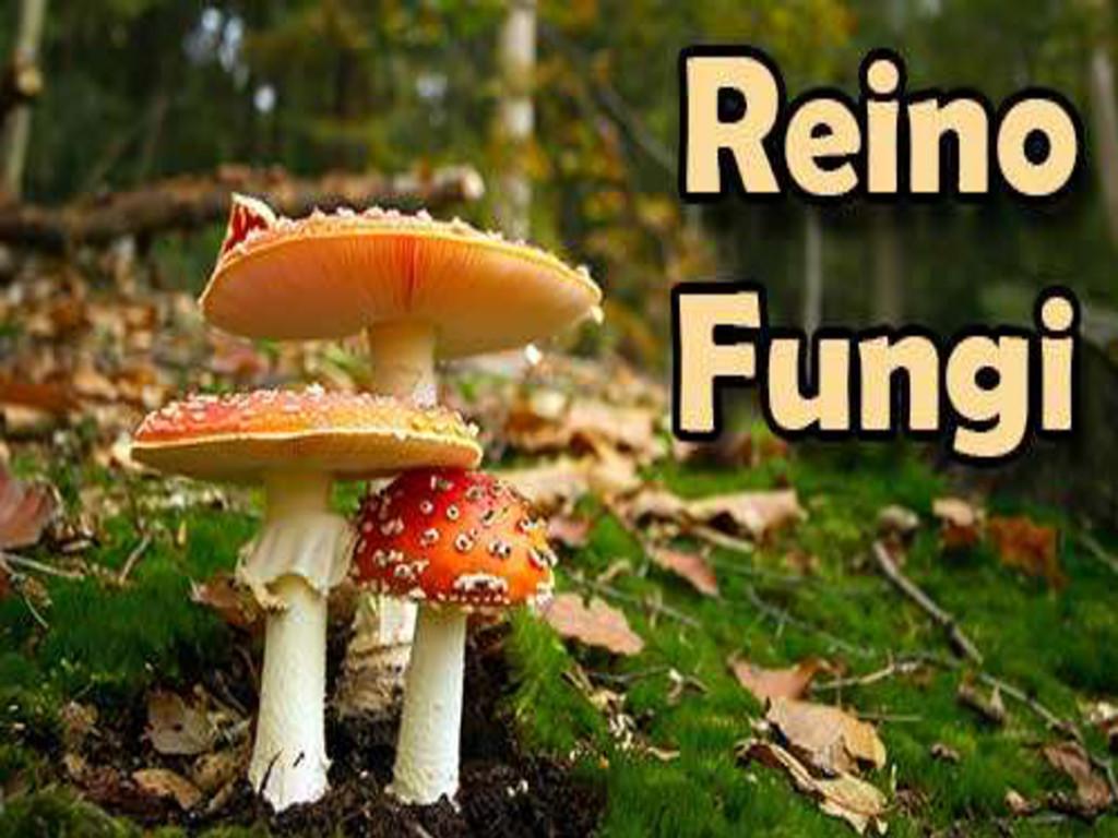 Aula de Biologia Tema: O Reino Fungi Daniel Pro...