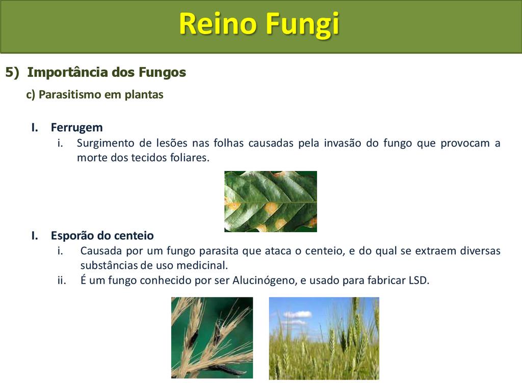 Reino Fungi 5) Importância dos Fungos c) Parasi...