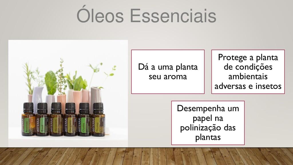 Óleos Essenciais Dá a uma planta seu aroma Prot...