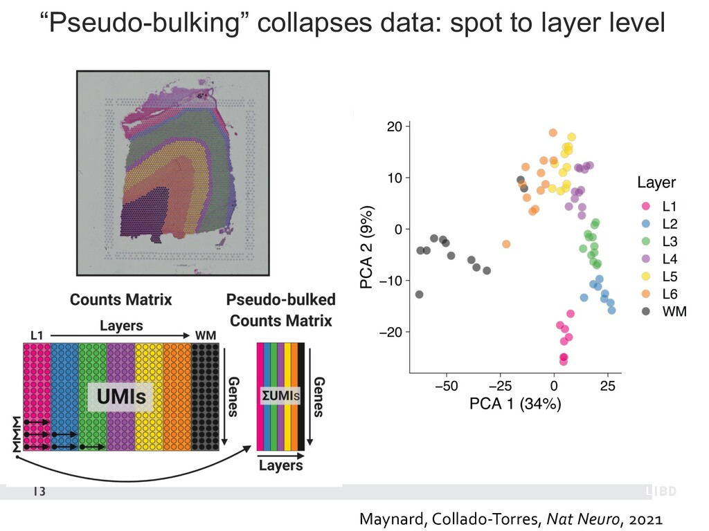 """""""Pseudo-bulking"""" collapses data: spot to layer ..."""