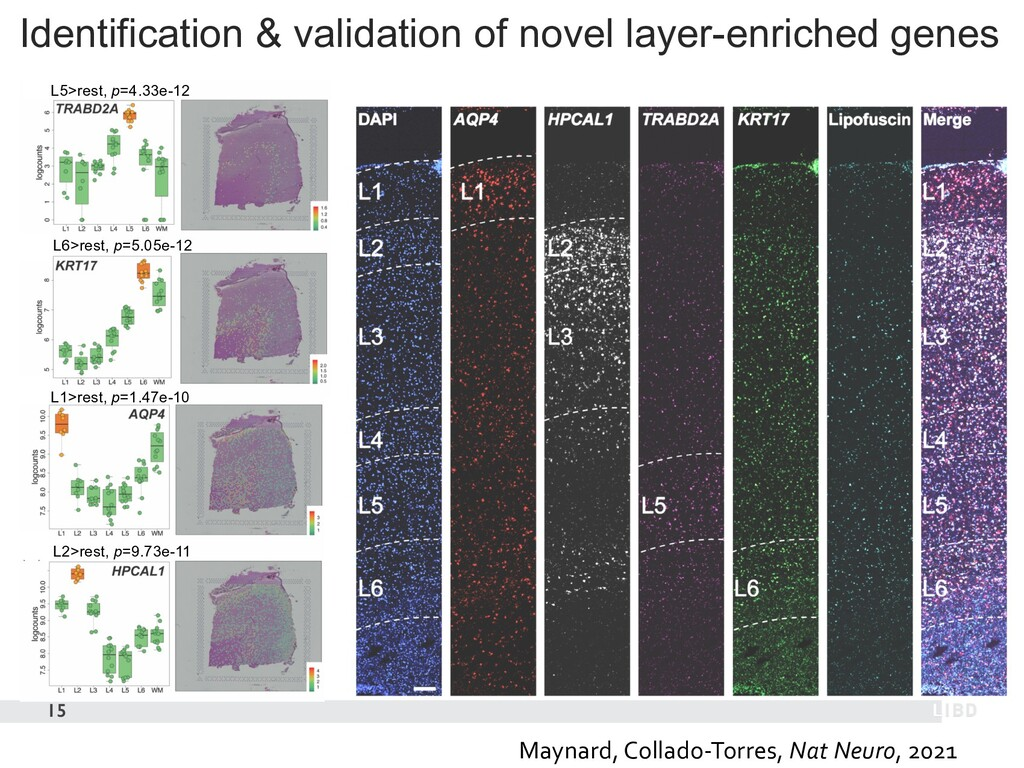 Identification & validation of novel layer-enri...