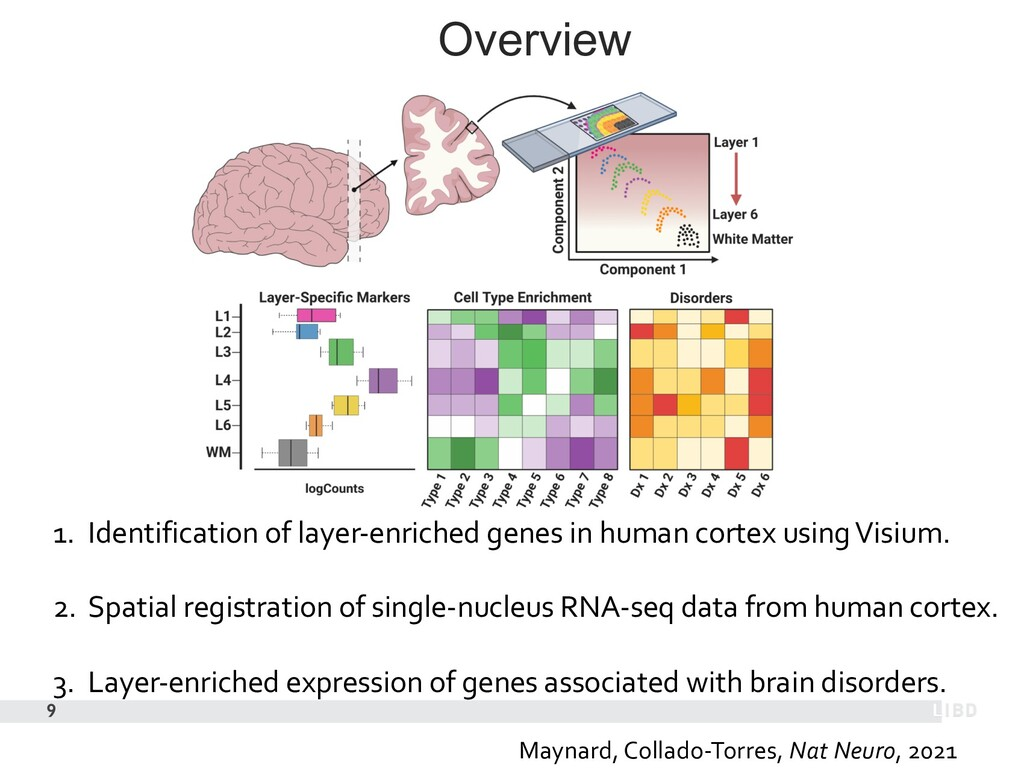 Overview 9 1. Identification of layer-enriched ...