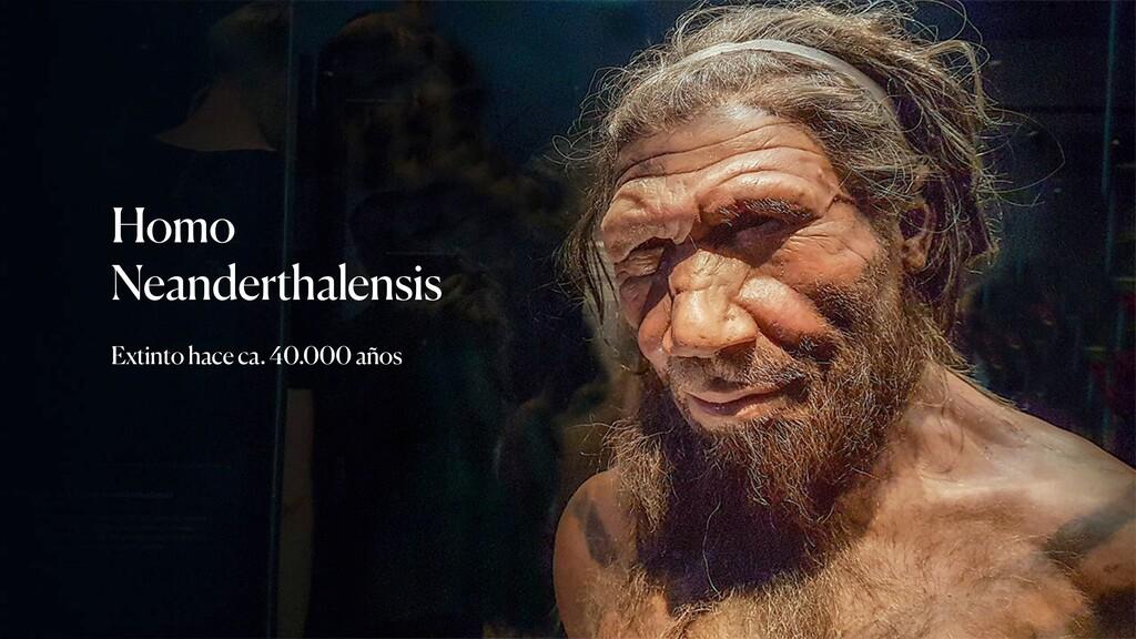 Homo Neanderthalensis Extinto hace ca. 40.000 a...