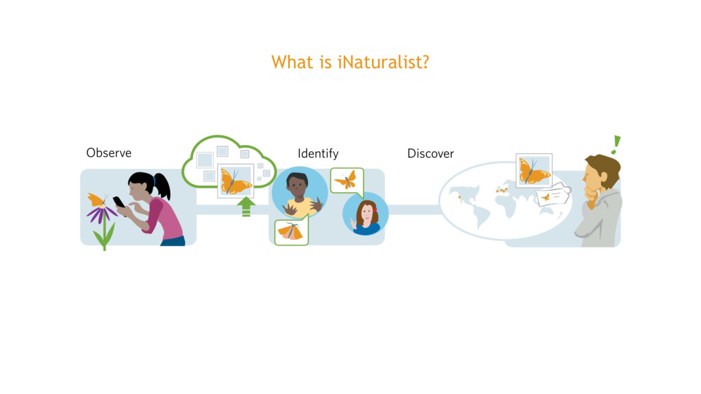 What is iNaturalist?