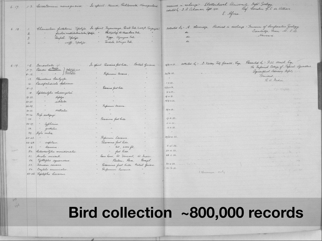 Bird collection ~800,000 records