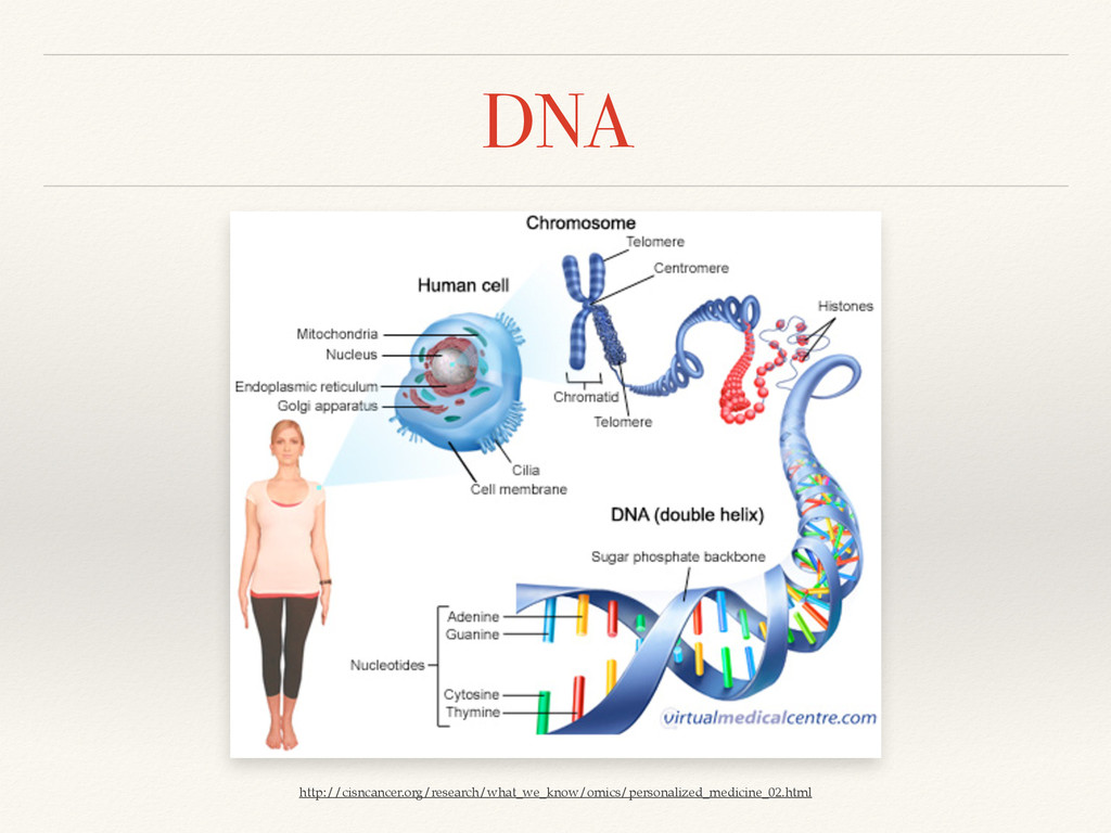 DNA http://cisncancer.org/research/what_we_know...