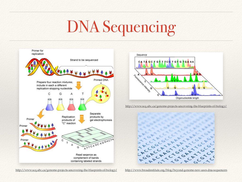 DNA Sequencing http://www.scq.ubc.ca/genome-pro...