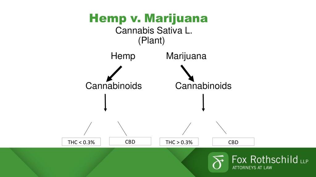 Hemp v. Marijuana Cannabis Sativa L. (Plant) He...