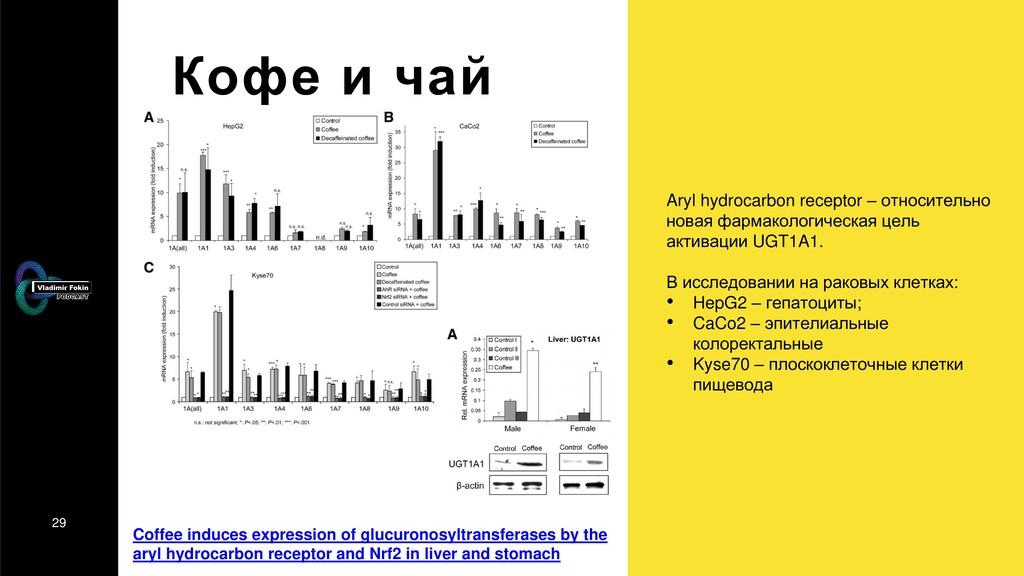 29 Кофе и чай Aryl hydrocarbon receptor – относ...