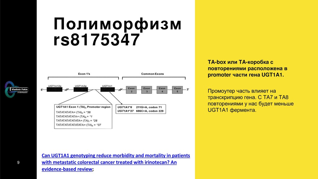 9 Полиморфизм rs8175347 TA-box или TA-коробка с...