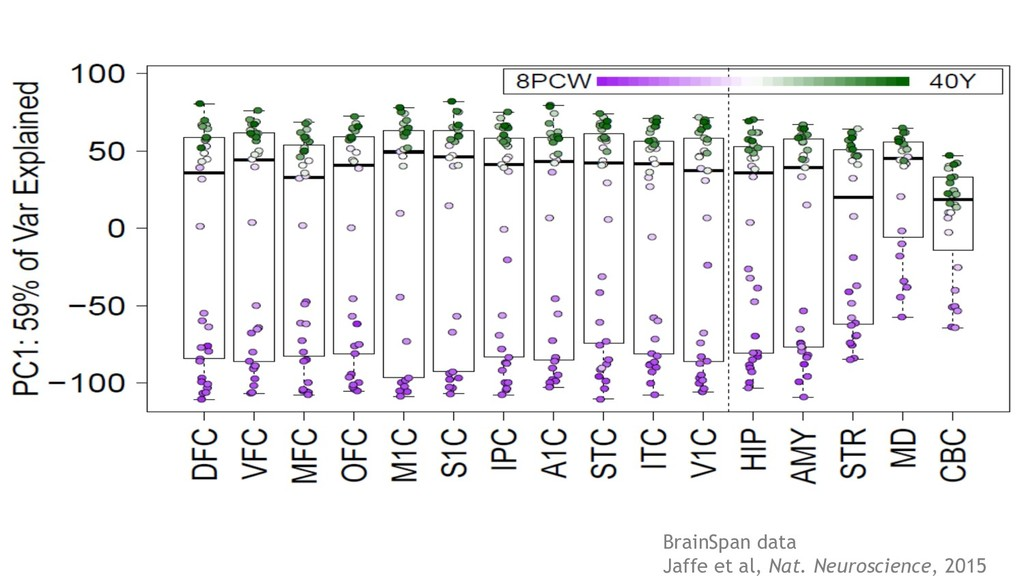 BrainSpan data Jaffe et al, Nat. Neuroscience, ...