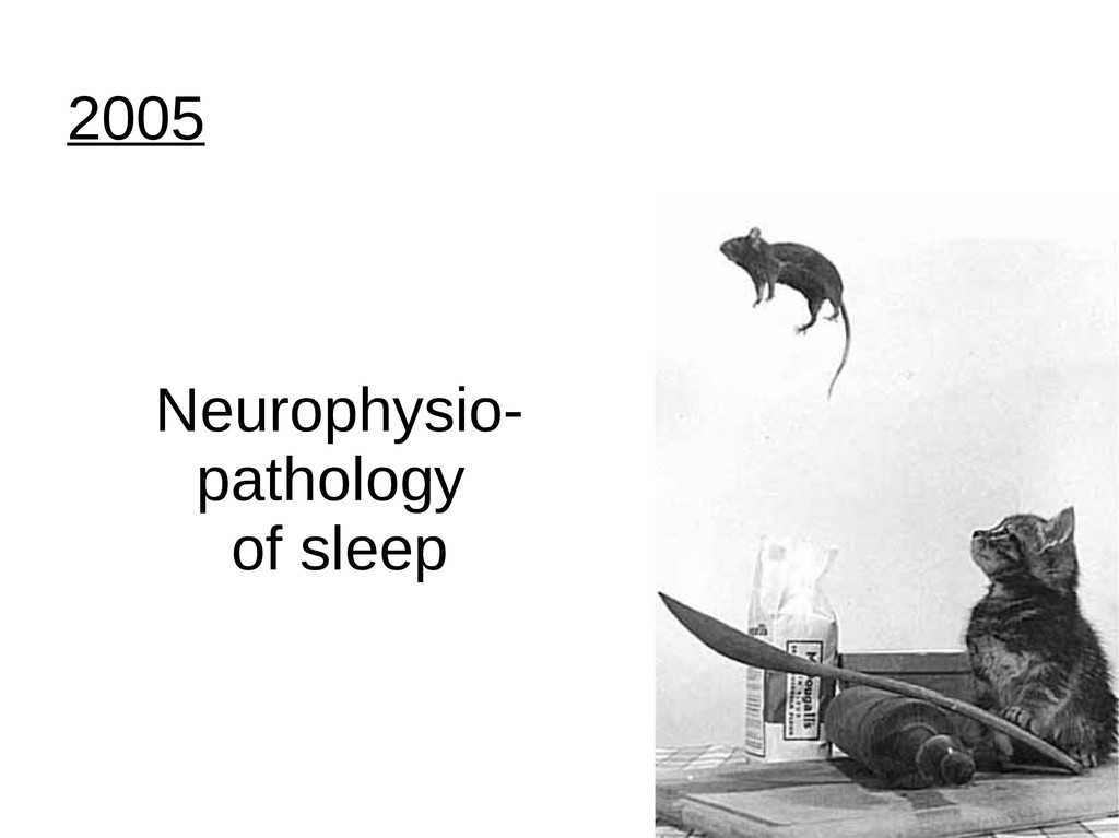 2005 Neurophysio- pathology of sleep