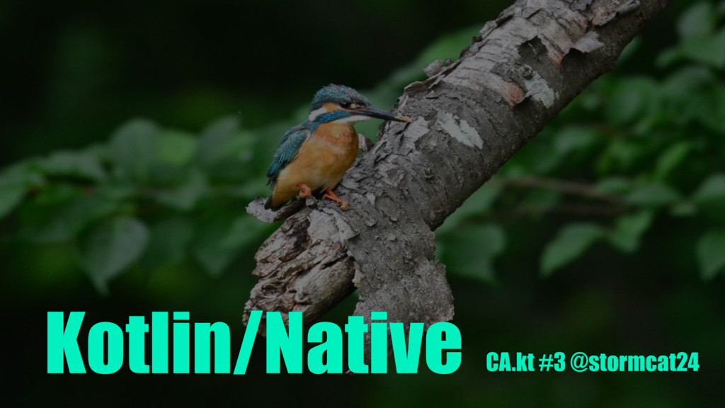 Kotlin/Native CA.kt #3 @stormcat24