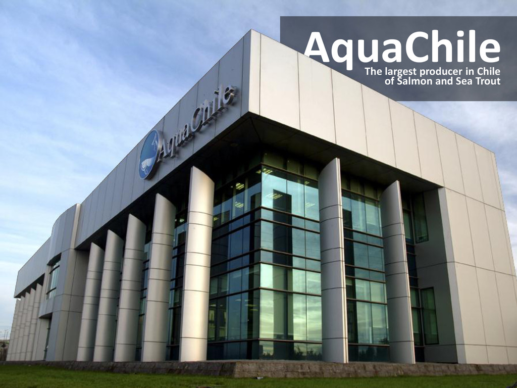 AquaChile The largest producer in Chile of Salm...
