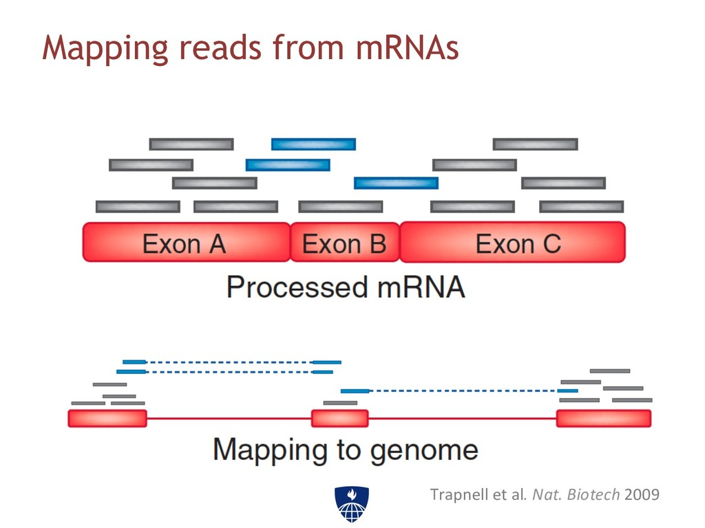 Mapping reads from mRNAs Trapnell et al....