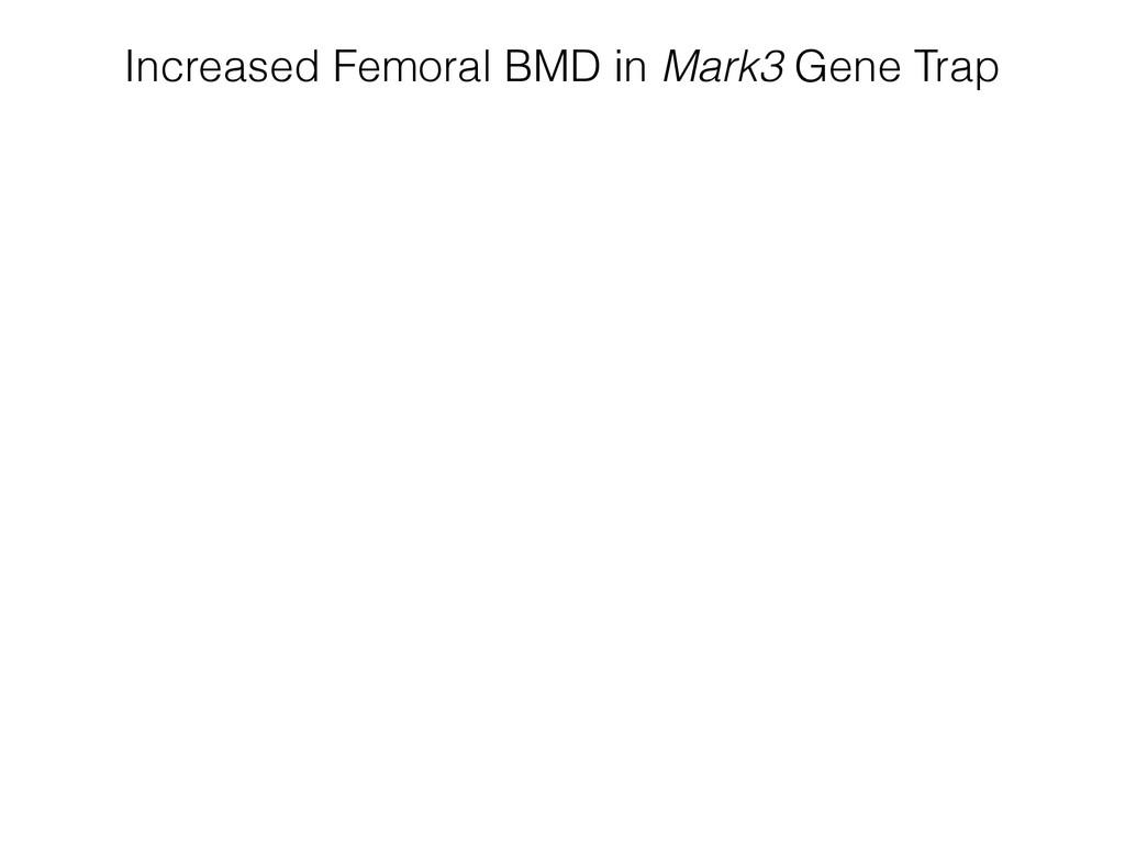 Increased Femoral BMD in Mark3 Gene Trap