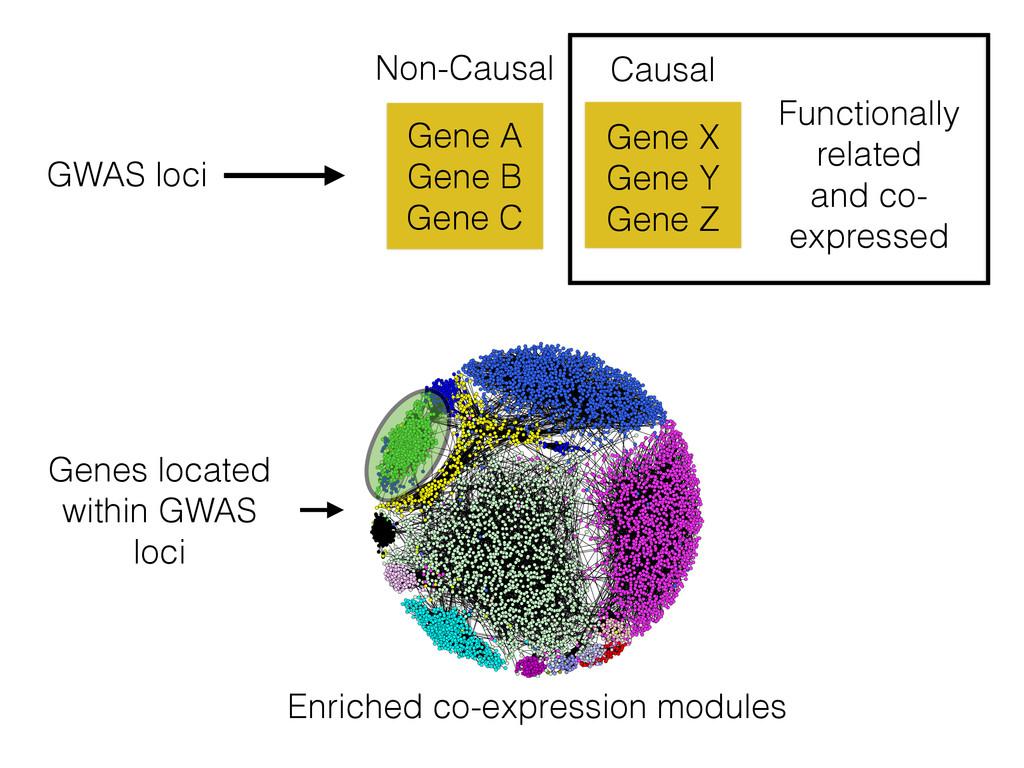 Enriched co-expression modules Gene X Gene Y Ge...