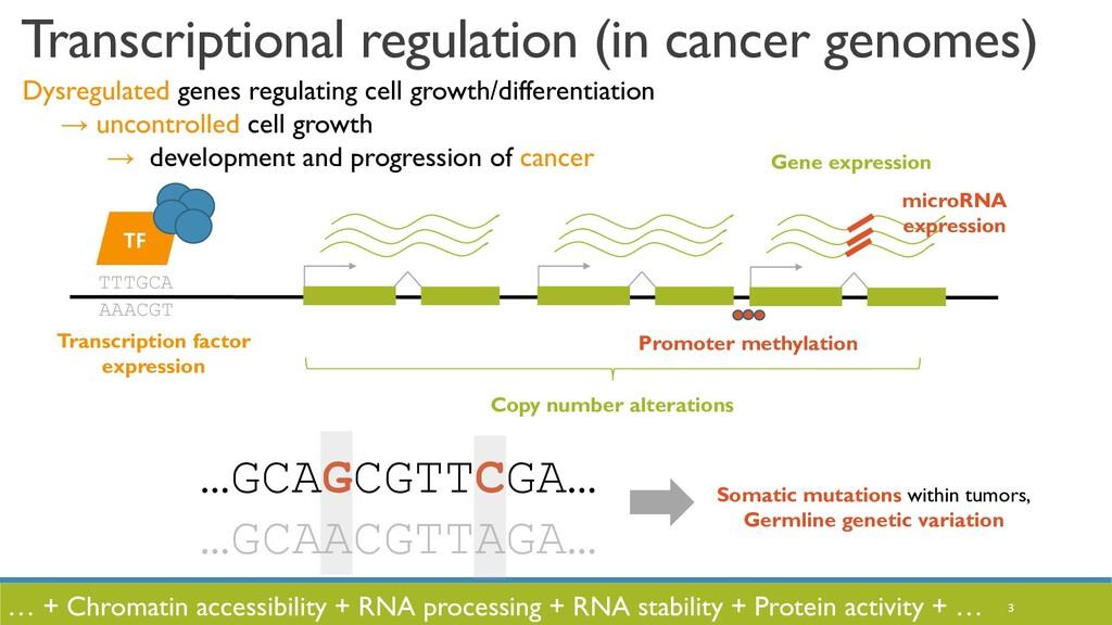 3 Gene expression TTTGCA AAACGT TF Transcriptio...