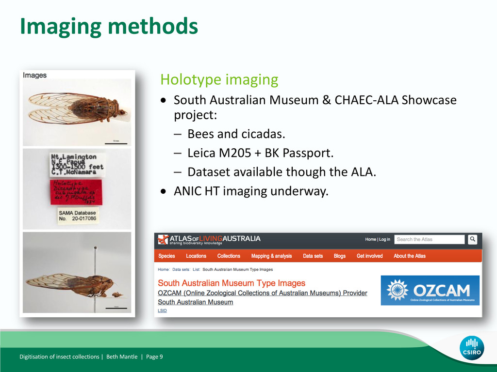 Holotype imaging  South Australian Museum & CH...