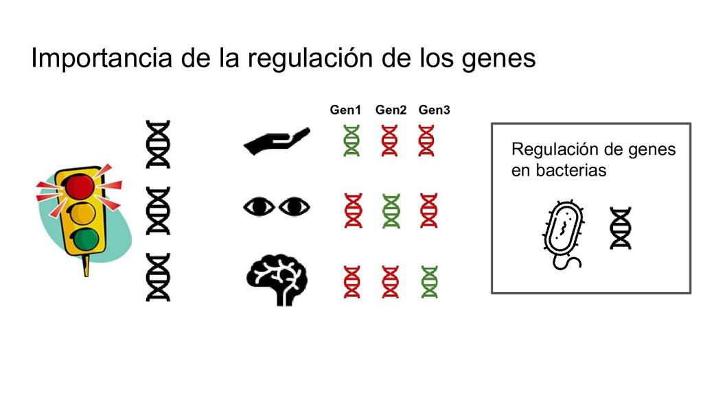 Importancia de la regulación de los genes Regul...