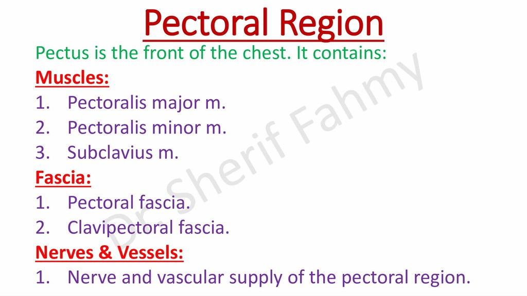 Pectoral Region Pectus is the front of the ches...