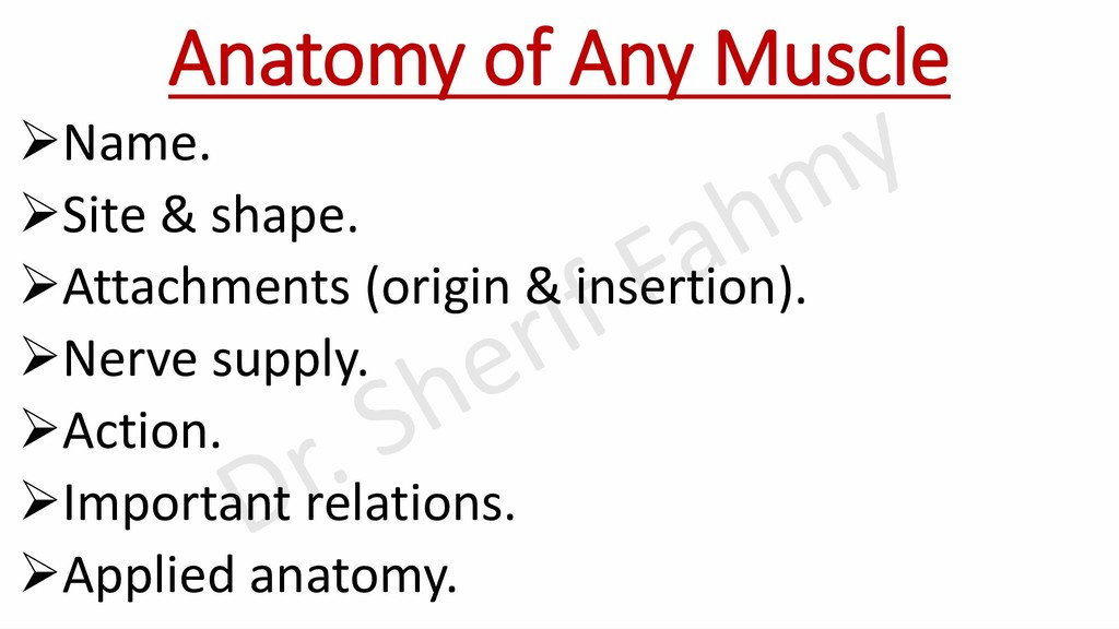 Anatomy of Any Muscle ➢Name. ➢Site & shape. ➢At...