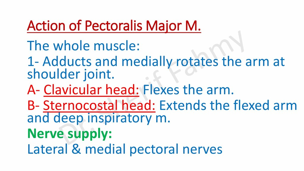 Action of Pectoralis Major M. The whole muscle:...