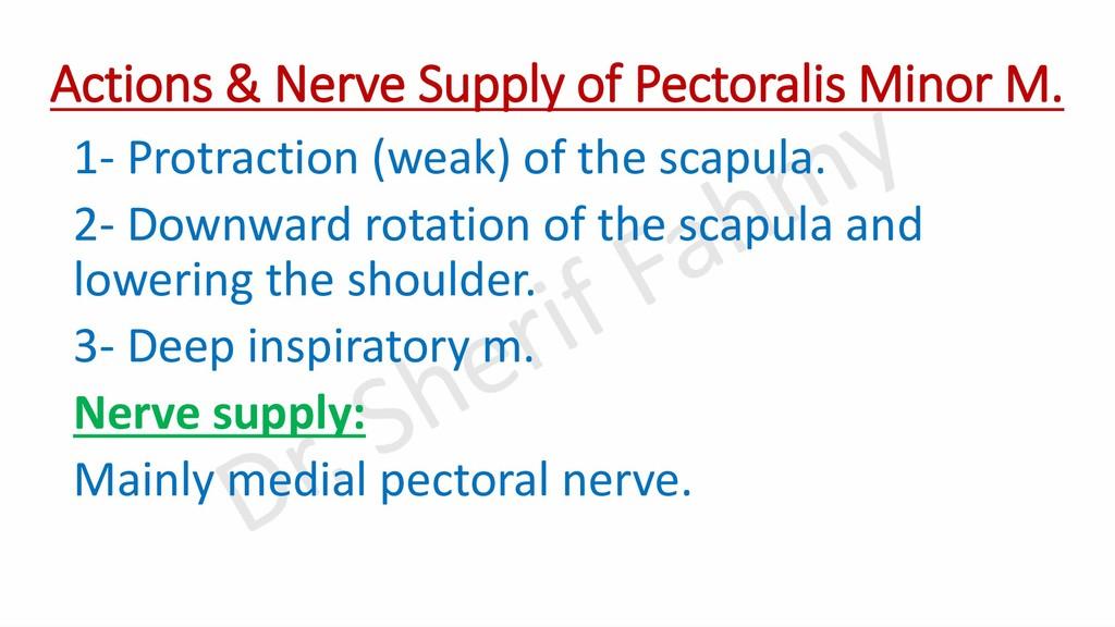 Actions & Nerve Supply of Pectoralis Minor M. 1...