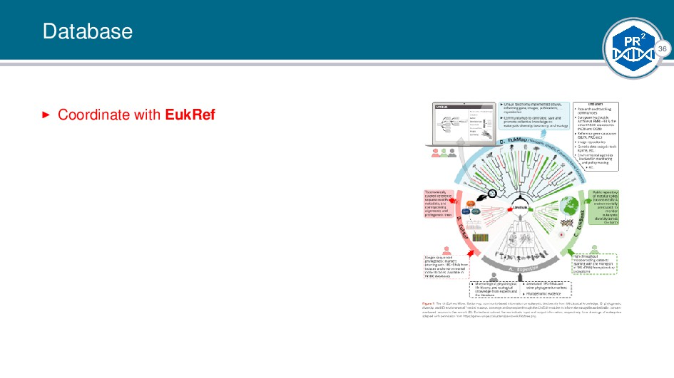 36 Database Coordinate with EukRef |