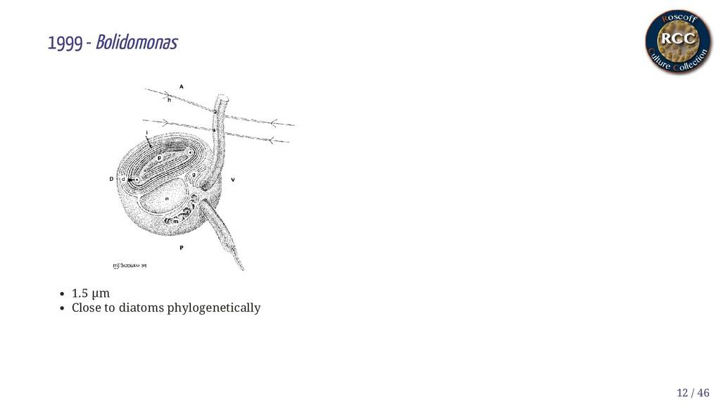 1999 - Bolidomonas 1.5 µm Close to diatoms phyl...