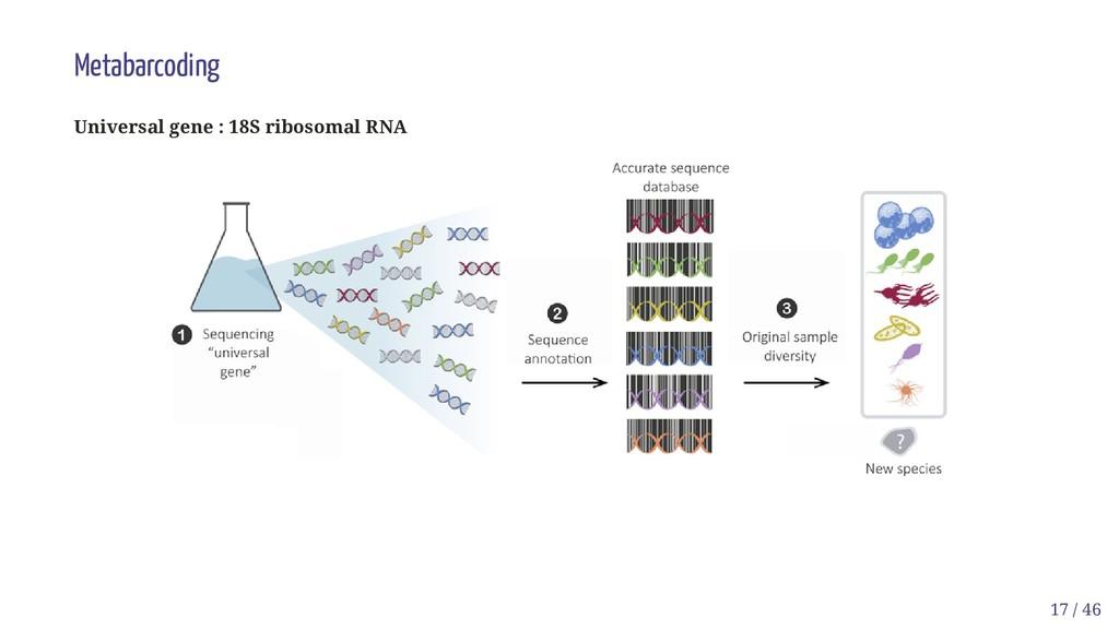 Metabarcoding Universal gene : 18S ribosomal RN...