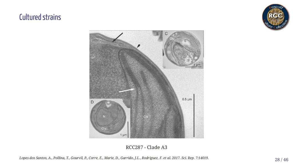 Cultured strains RCC287 - Clade A3 Lopes dos Sa...