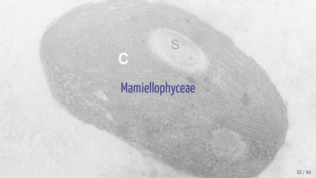 Mamiellophyceae 32 / 46
