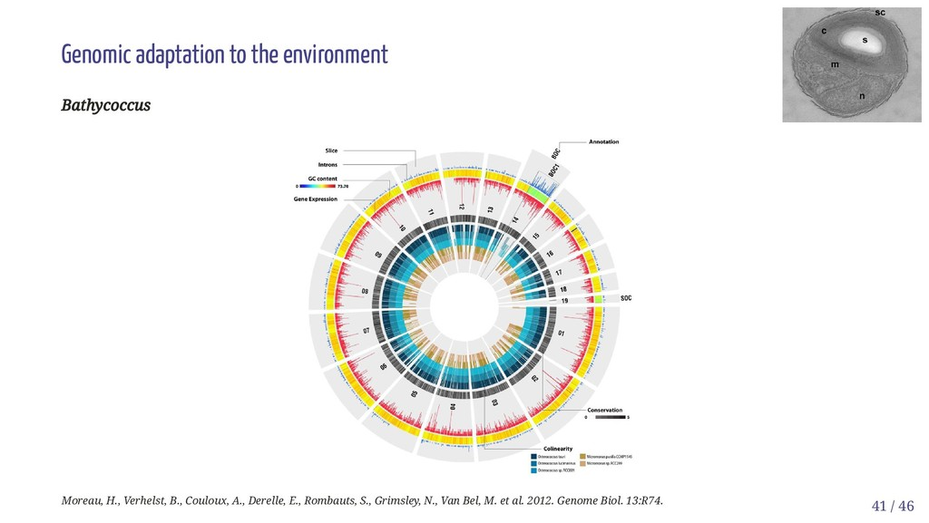 Genomic adaptation to the environment Bathycocc...