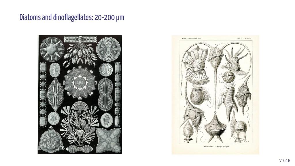 Diatoms and dino agellates: 20-200 µm 7 / 46