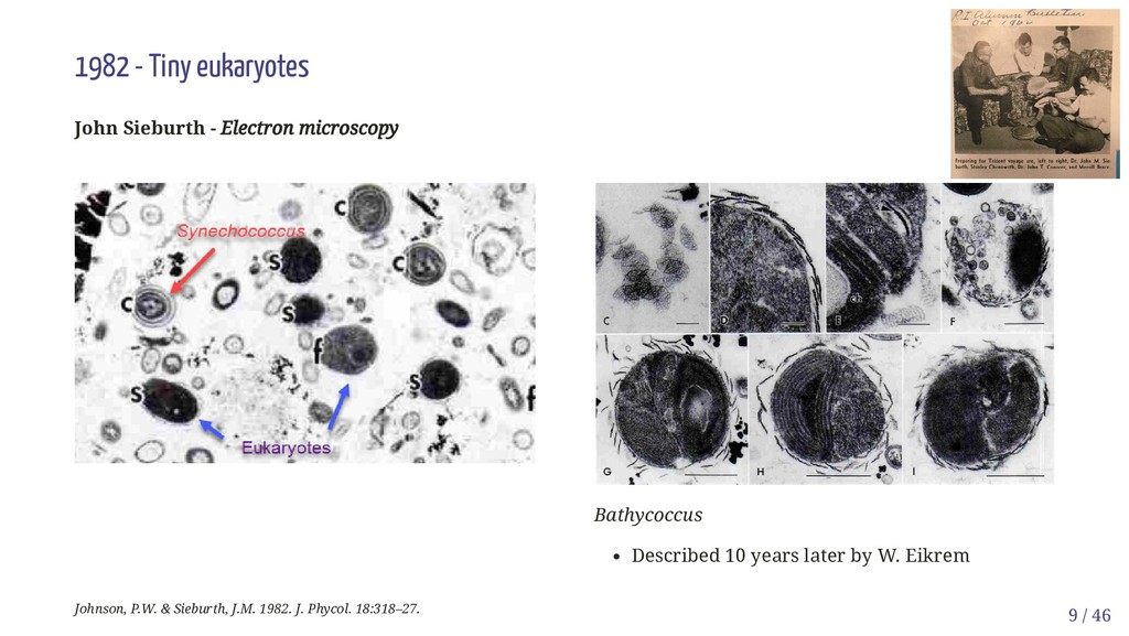 Bathycoccus Described 10 years later by W. Eikr...