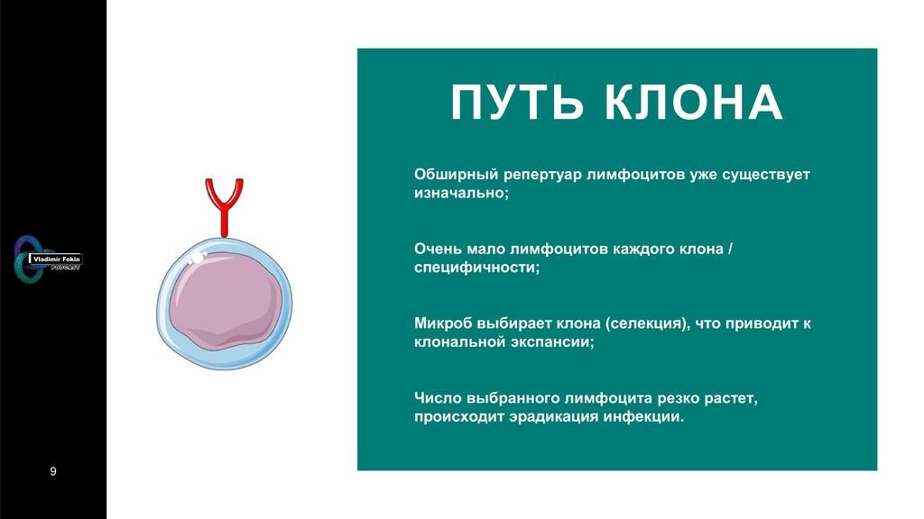9 ПУТЬ КЛОНА Обширный репертуар лимфоцитов уже ...