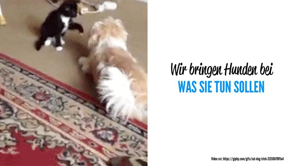 Wir bringen Hunden bei WAS SIE TUN SOLLEN Video...