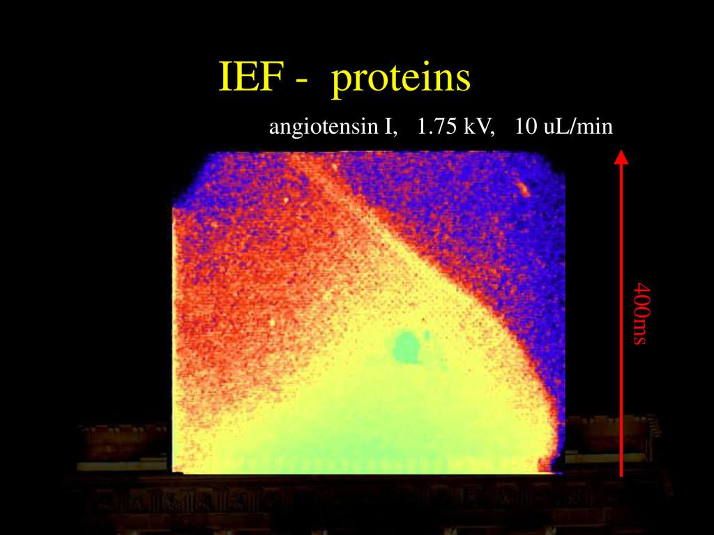 IEF - proteins angiotensin I, 1.75 kV, 10 uL/mi...