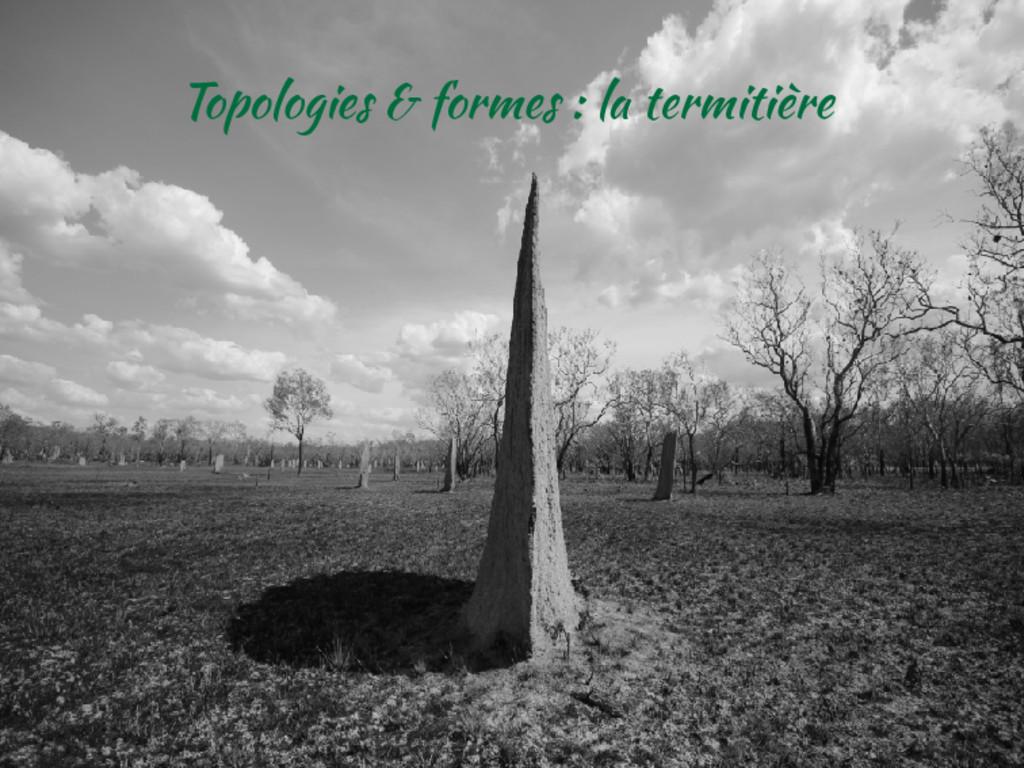 Topologies & formes : la termitière
