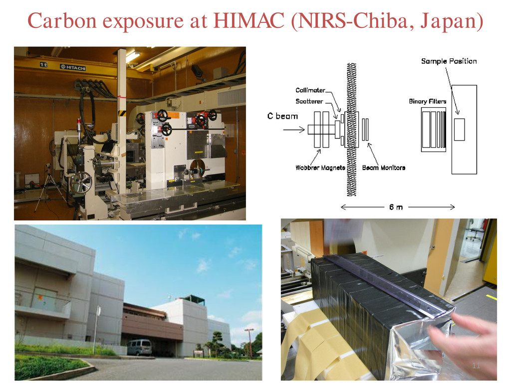 Carbon exposure at HIMAC (NIRS-Chiba, Japan) 11